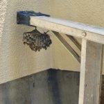 蜂の巣がぁ、、、
